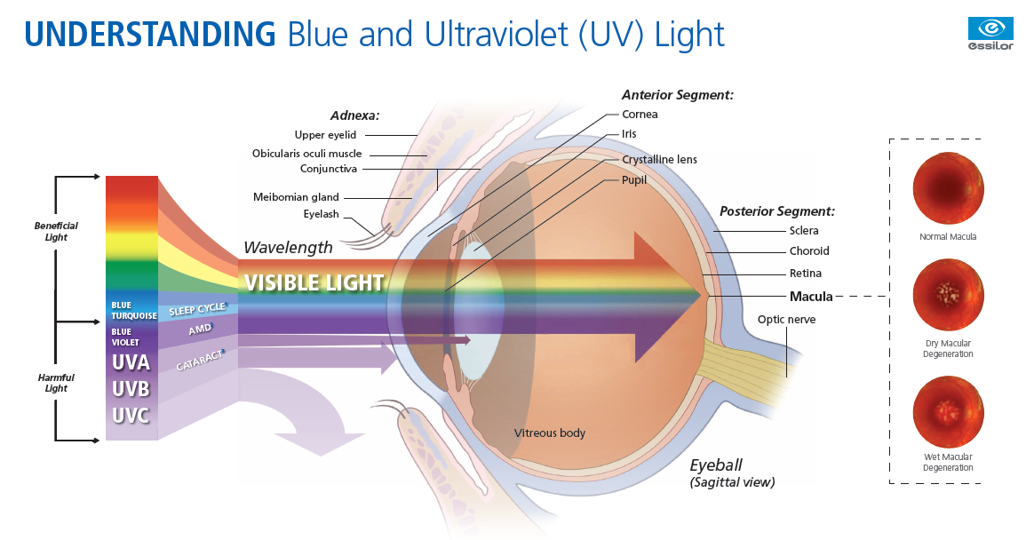 Crizal Prevencia anti-reflective coating helps block harmful blue light